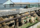 Weaning Fall 2012