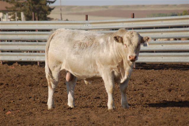 Eatons White Oak 10311